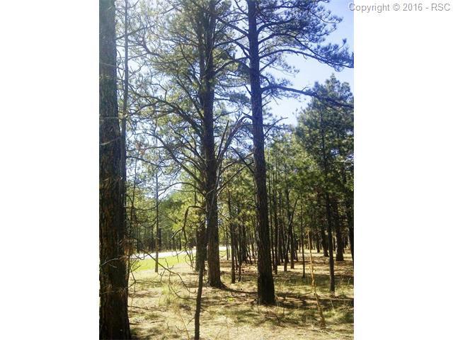 16245  Pole Pine Point Colorado Springs, CO 80908