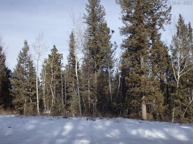 1316  Spruce Ridge Lane Woodland Park, CO 80863