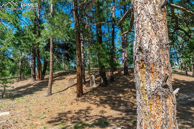 18845 Hilltop Pines Path Monument, CO 80132