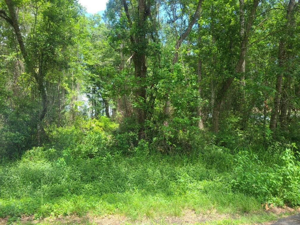 253 Buffalo Drive Brunswick, GA 31523