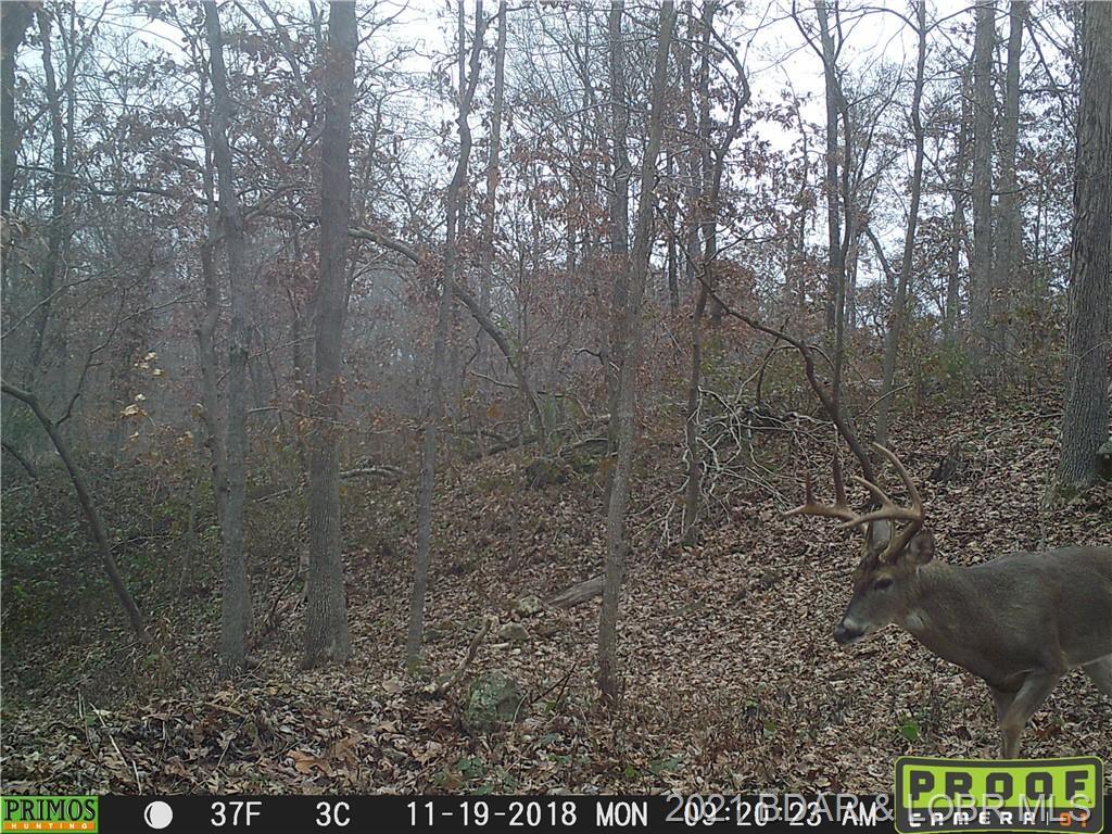 Down Timber Roach, MO 65787