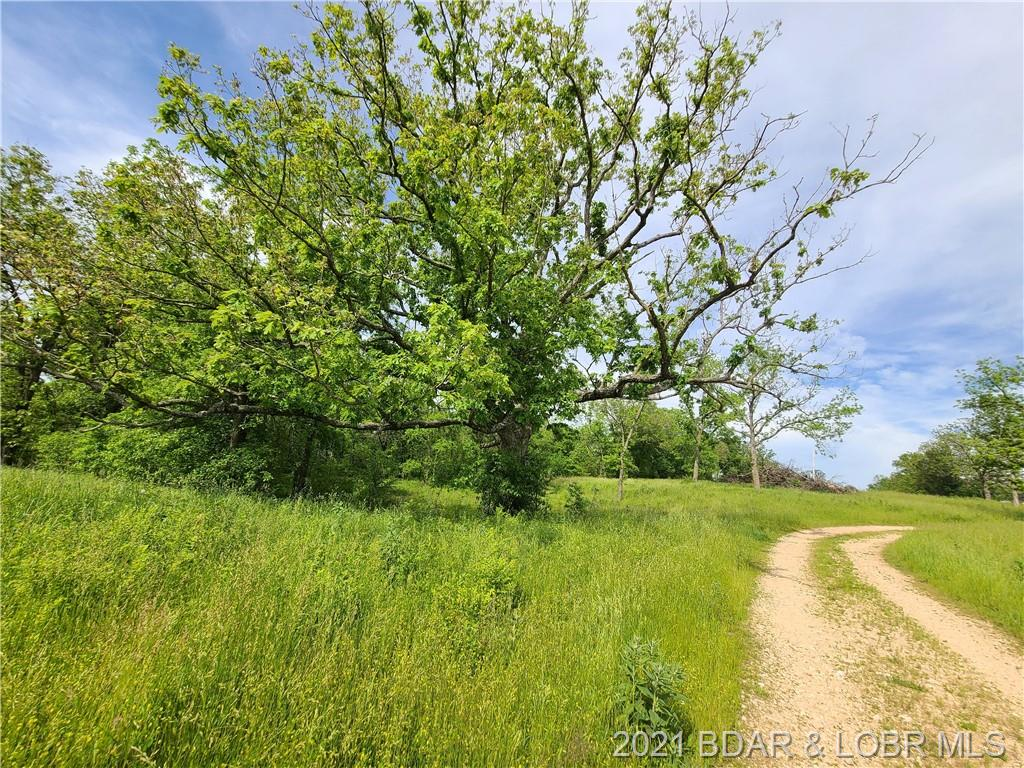 Tract #5 Rollins Creek Road Richland, MO 65556